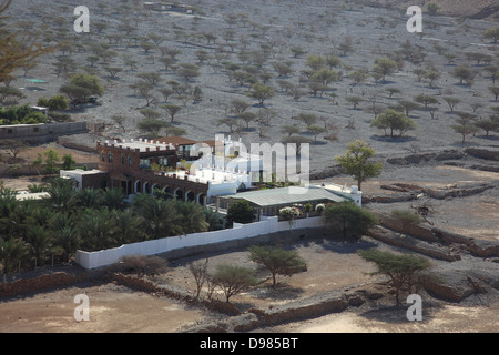 Palm grove in the bay of Bukha, in the granny's niches enclave of Musandam, Oman - Stock Photo