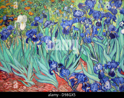 Irises is a painting by Vincent van Gogh 1853 – 1890, Dutch post-Impressionist painter. Irises was painted while - Stock Photo