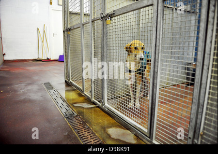 A dog at Cardiff Dogs Home, who faced overcrowding after Christmas. - Stock Photo