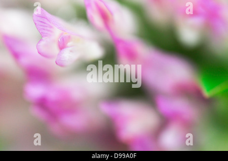 Red clover flower in macro composition. - Stock Photo