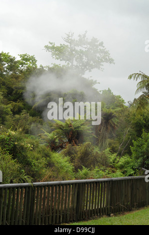 Steam escaping hot water and mud vents in the bush - Stock Photo
