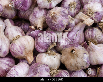 Freshly picked red garlic on display at the farmers market - Stock Photo