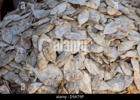 Asia, India, Karnataka, Madikeri, dried fish on the market - Stock Photo
