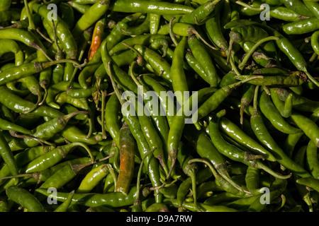Asia, India, Karnataka, Madikeri, fresh green chili peppers - Stock Photo