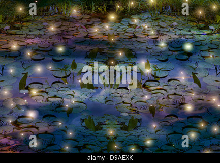 fireflies and water lily pond depiction - Stock Photo