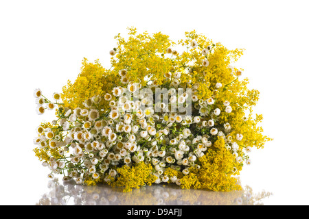 beautiful bouquet of summer flowers on a white background - Stock Photo