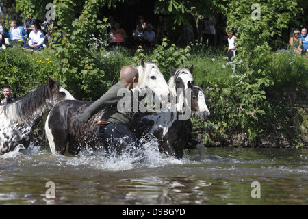 Gypsies wash their horses and ponies in the River Eden before parading them for sale at Appleby Horse Fair, in Cumbria, - Stock Photo