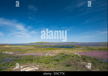 North Pond, Skomer Island, South Pembrokeshire, Wales, United Kingdom - Stock Photo