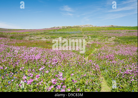 View towards Gorse Hill on the island of Skomer in spring, South Pembrokeshire, Wales, United Kingdom - Stock Photo