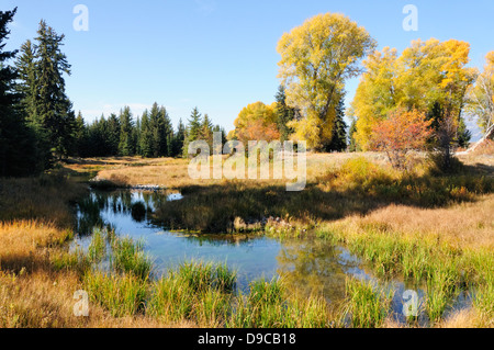 Autumn pond reflects blue sky in meadow. - Stock Photo
