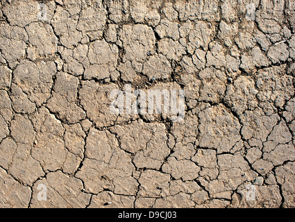 Dry cracked earth in desert. Background. Close-up - Stock Photo