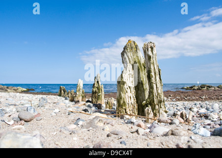 Old breakwaters on the Baltic Sea - Stock Photo