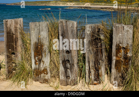 WOODEN FENCE POSTS ON A BEACH NEAR THE SEA - Stock Photo