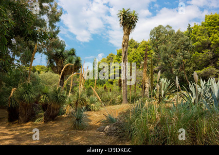 Various cactus plants growing on the island Lokrum in Croatia near the famous city of Dubrovnik. - Stock Photo