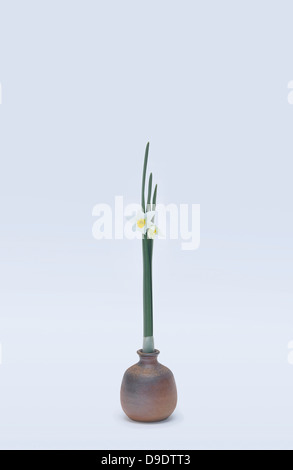 Stylised daffodils in vase - Stock Photo