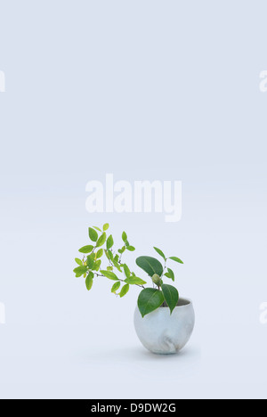 Varied stems with green leafs in vase - Stock Photo