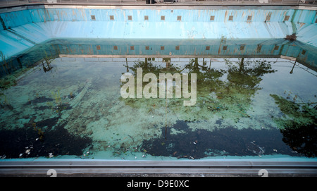 Unused diving pool filled with standing water, algae and plant growth - Stock Photo