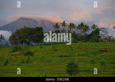 Indonesia, Bali, Sidemen, rice fields in terrace and the Gunung Agung Volcano in the background - Stock Photo