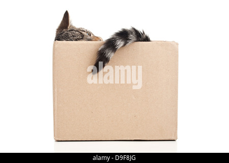Young cat in a carton, putties in a cardboard punch - Stock Photo