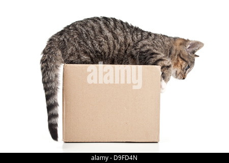 Young cat in a carton to putties in a cardboard punch - Stock Photo