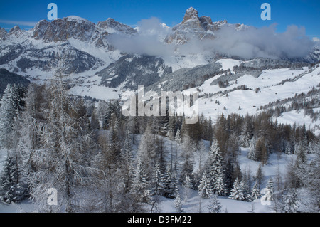 A view over snow covered pine trees to Sassongher Mountain from Alta Badia ski resort in the Dolomites, South Tyrol, - Stock Photo