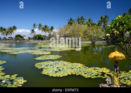 Lily pond, Candi Dasa, Bali, Indonesia, Southeast Asia - Stock Photo