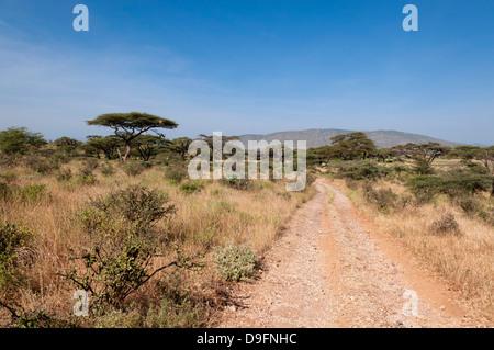 Samburu National Reserve, Kenya, East Africa, Africa - Stock Photo
