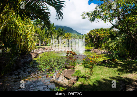 Island Of Nevis St Kitts And Nevis Caribbean Old Nevesian Wood Stock Photo Royalty Free Image