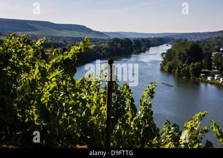 Vines above the Main valley, Franconia, Bavaria, Germany - Stock Photo