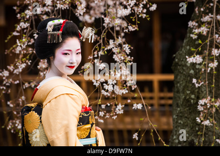 Real Geisha posing before a cherry blossom tree in the Geisha quarter of Gion in Kyoto, Japan - Stock Photo