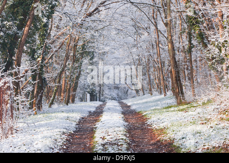 Snow covered trees in the Loire Valley area, Loir-et-Cher, Centre, France - Stock Photo