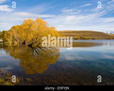 Autumn trees reflected in the still morning water, Lake Alexandrina, Canterbury  Region, South Island, New Zealand - Stock Photo