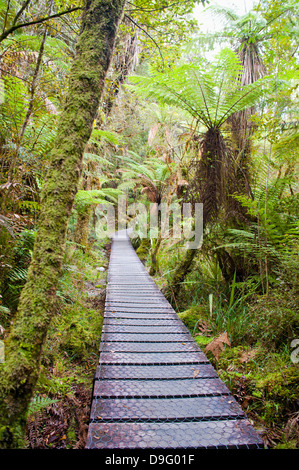 Forest walkway surrounding Lake Matheson, Westland National Park, UNESCO World Heritage Site, South Island, New - Stock Photo
