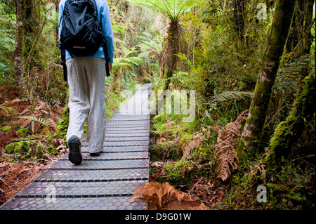Tourist on the walkway in the forest surrounding Lake Matheson, Westland National Park, UNESCO Site, South Island, - Stock Photo