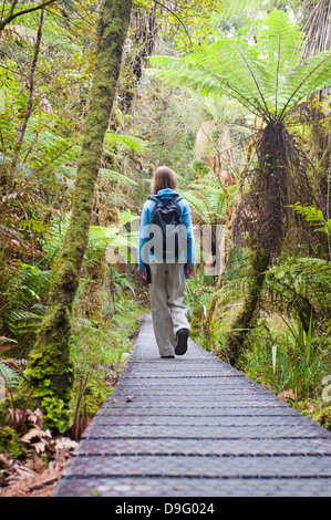 Lake Matheson, tourist on the walkway in the forest, Westland National Park, South Island, New Zealand - Stock Photo