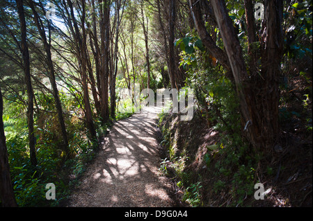 Paths in the rainforest surrounding Pupu Springs (Te Waikoropupu Springs), Golden Bay, Tasman Region, South Island, - Stock Photo