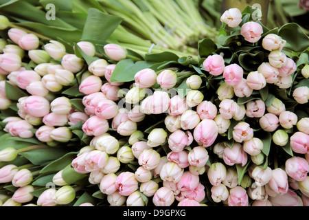 Pink flowers in a flower shop in the center of Copenhagen, Denmark - Stock Photo
