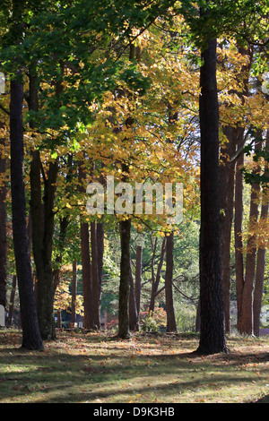 trees forest woods wood leaves leaf sunshine shadow spring summer fall autumn - Stock Photo
