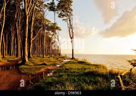 Baltic sea coast at Ostseebad Nienhagen with Haunted Woods at sunset - Stock Photo