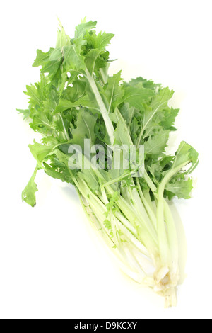 Turnip green leafs on a bright background - Stock Photo