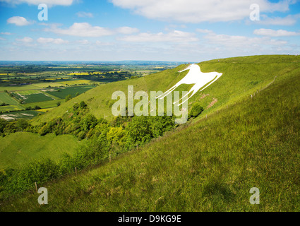 Westbury White Horse and the earthworks of Bratton Camp on the Wiltshire Downs near Trowbridge UK - Stock Photo