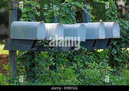 A row of traditional mailboxes covered in ivy - Stock Photo