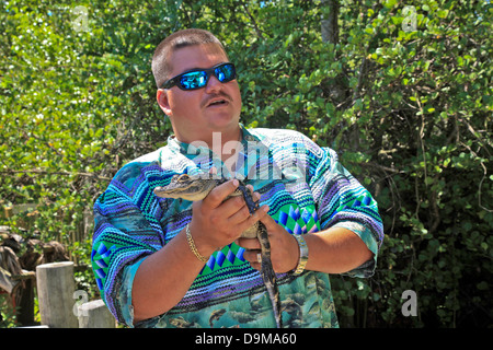 Small Bay Alligator held in hand by Native Tour Guide in Everglades National Park;Florida;USA - Stock Photo