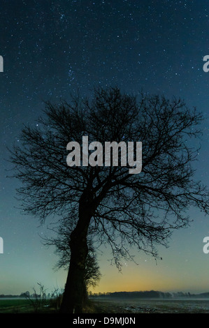 Star sky, stairy, stars, night, tree, scenic - Stock Photo