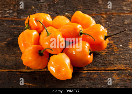 Organic Hot and Spicy Habanero Peppers against a background - Stock Photo
