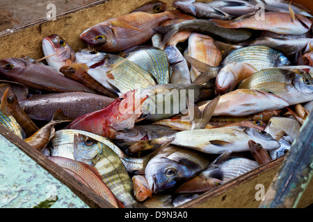 Today's catch of fish from the sea - Stock Photo