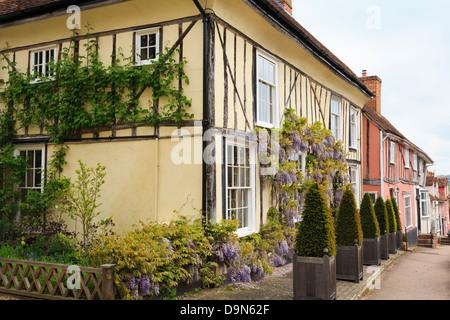 Wisteria floribunda growing on a yellow timbered house front in historic village street. Lavenham, Suffolk, England, - Stock Photo