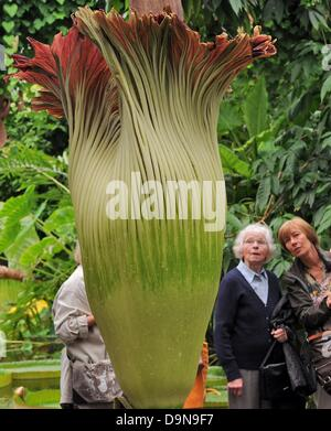 Forum on this topic: The corpse flower only blooms for 48 , the-corpse-flower-only-blooms-for-48/