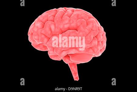 Conceptual image of human brain. - Stock Photo