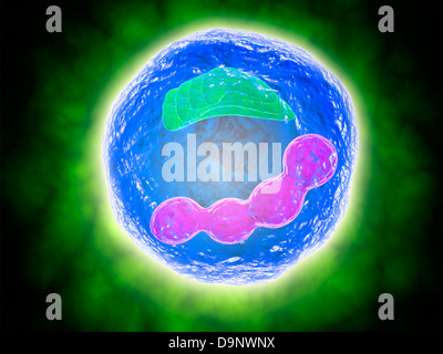 Conceptual image of human cell. - Stock Photo